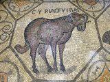 pavimento a mosaico (tappeto musivo) della basilica di aquileia